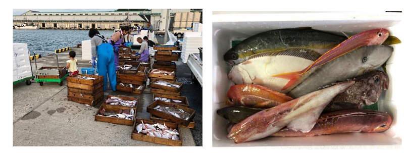 ダイエーは水揚げされた鮮魚をECサイトで注文を受けた当日に配送、最短で買い付け翌日に商品を届ける取り組みを開始した